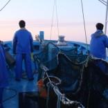 漁業ボランティア